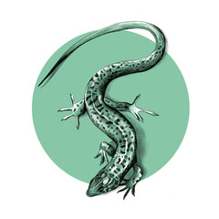 lizard top view crawling, sketch vector graphics black and white pattern on the background of green circle