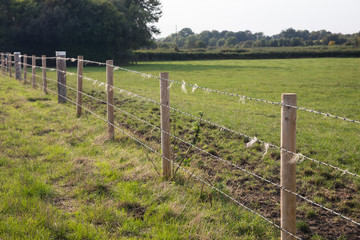 Animal scratching fence on farm in England
