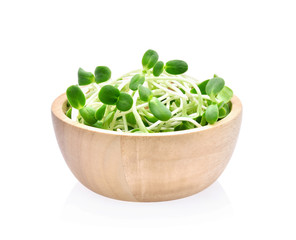 green young sunflower sprouts on white background