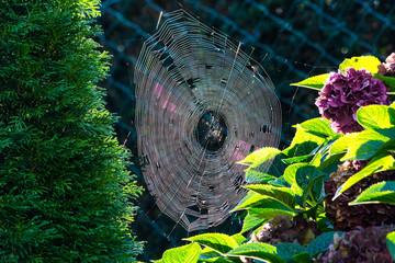 Spinnennetz mit Morgentau mit Gegenlicht