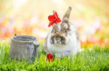 Frühling Hase