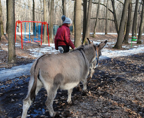 The girl leads the donkey. Early spring in the forest