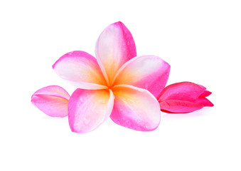 Frangipani flower with water droplets