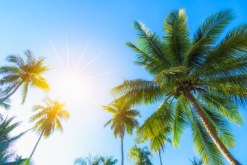Coconut palm trees on beach with sunshine in summer.