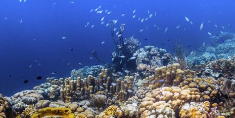 Aluminium Prints Under water Coral reef island Bonaire