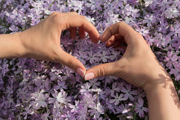 Women's hands folded in the shape of a heart and flowers. Romance
