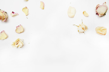 Blossom roses on the white background, top view, Flat lay