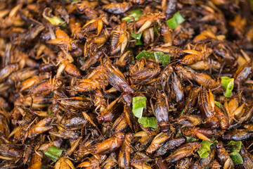 Cricket Bug fried Asian Insect Snack food, High Protein from nature.