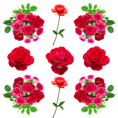 Collection roses flowers
