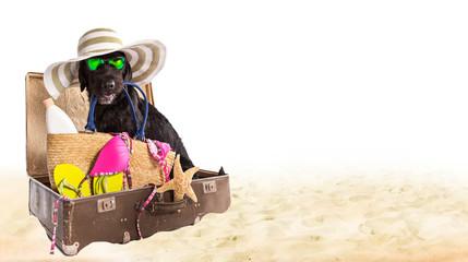 Funny black dog on a sandy beach.