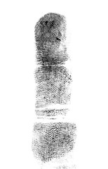 Fingerprint of the index finger on a white background