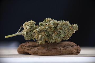 Single cannabis bud (mangolope marijuana strain) on dark background