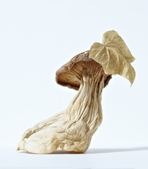 Dried mushroom against white background