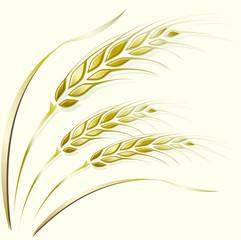 Wheat ears frame, border or corner element.