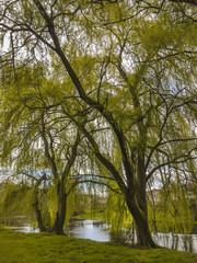 Trees on Arnoia river shore.