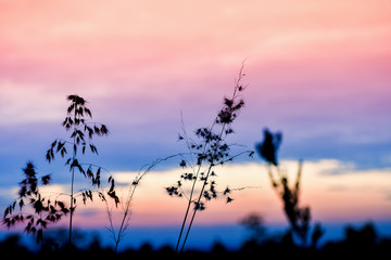 Wide silhouette of long grass