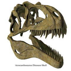 Acrocanthosaurus Skull with Font - Acrocanthosaurus was a carnivorous theropod dinosaur that lived in North America in the Cretaceous Period.