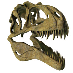 Acrocanthosaurus Dinosaur Skull - Acrocanthosaurus was a carnivorous theropod dinosaur that lived in North America in the Cretaceous Period.