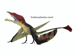 Eudimorphodon Resting with Font - The carnivorous Eudimorphodon was a pterosaur flying reptile that lived in Italy in the Triassic Period.