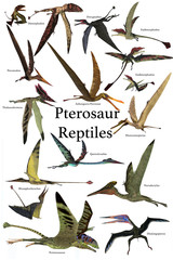Pterosaur Reptiles - A collection of various Pterosaur reptiles from different prehistoric periods of Earth's history.