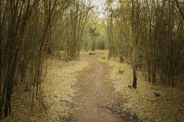 walk way between bamboo tree in forest