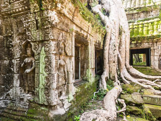 Ta Prohm temple in Angkor near Siem Reap in Cambodia