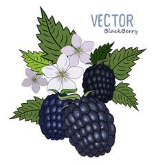 Berries and flowers of the forest blackberries