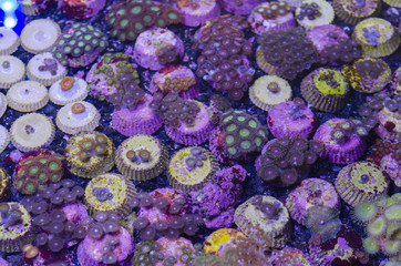 Underwater Fantasy coral