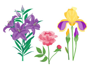 Cartoon petal vintage floral vector bouquet garden flower botanical natural peonies illustration and summer floral greeting card spring blossom.