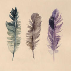 Hand drawn watercolor feathers