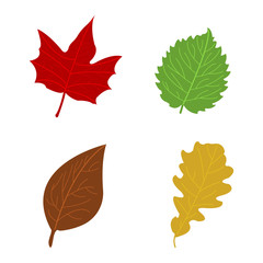 Cartoon flat autumn leaves on white background. Vector illustration.