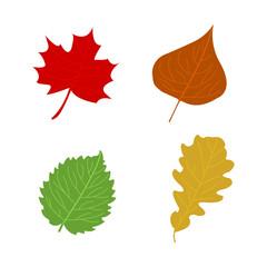 Cartoon flat autumn leaves on white background. Vector illustration.