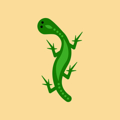 flat icon on background lizard reptile