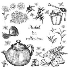 Hand drawn herbal tea collection.