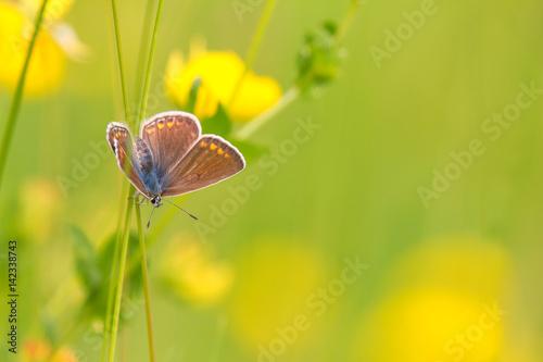 beautiful butterfly wundersch ner schmetterling zdj. Black Bedroom Furniture Sets. Home Design Ideas