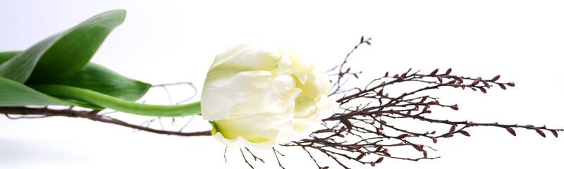 Tulpe mit Dekoration im Panorama | isoliert