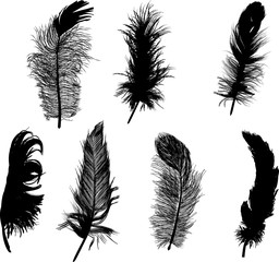 seven small black feathers isolated on white