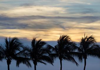 Пальмы на берегу моря на фоне сумеречного неба