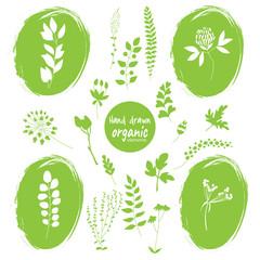 set of hand drawn organic elements