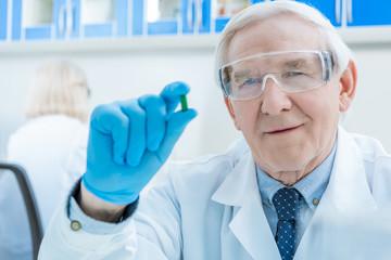portrait of senior man scientist showing pill in hand in lab