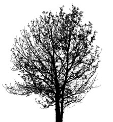black and white tree with white background