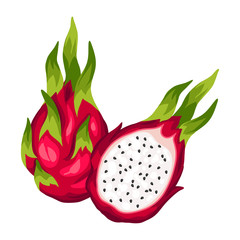 Dragon fruit isolated on white background. Illustration of tropical plant