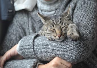 Tabby cat on hands