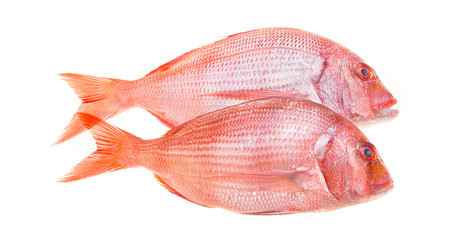 Snapper Fish On White