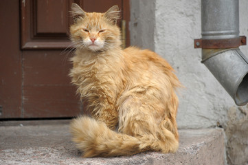 Homeless red cat