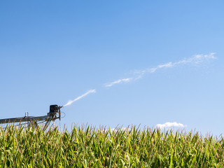 Agriculture Background Close Up of Farm Sprinkler Watering Crops
