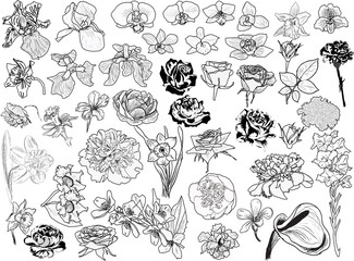 large set of light flower sketches collection on white