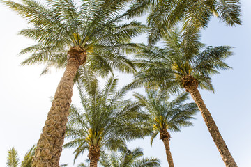 Summer nature scene. coconut palm trees with blue sky