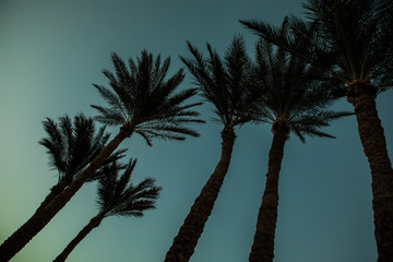 palm trees on the background of a beautiful sunset. Summer time