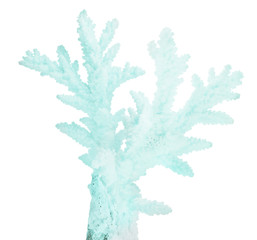 cyan medium isolated coral branch
